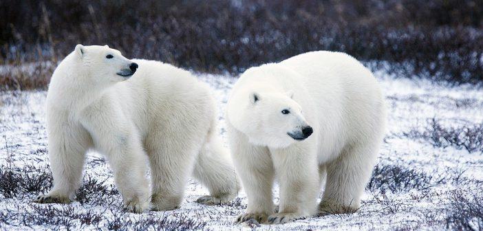 Podcast: Expeditionsreisen von Hurtigruten